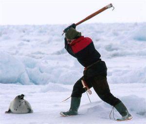 caza_focas_canada