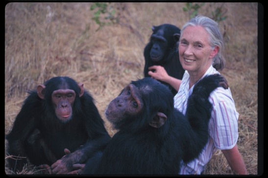 janegoodall_and_chimps