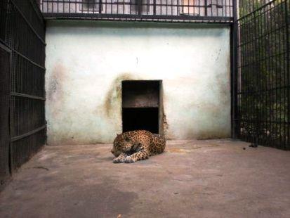 zoos_europa