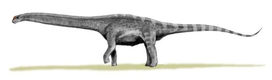 Argentinosaurus (Wikimedia)