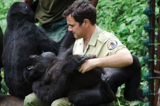 Emmanuel de Merode con gorilas huerfanas