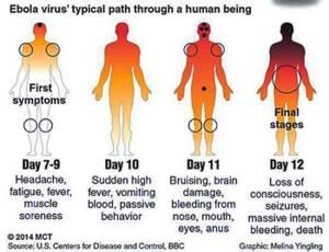 ebola_evolucion